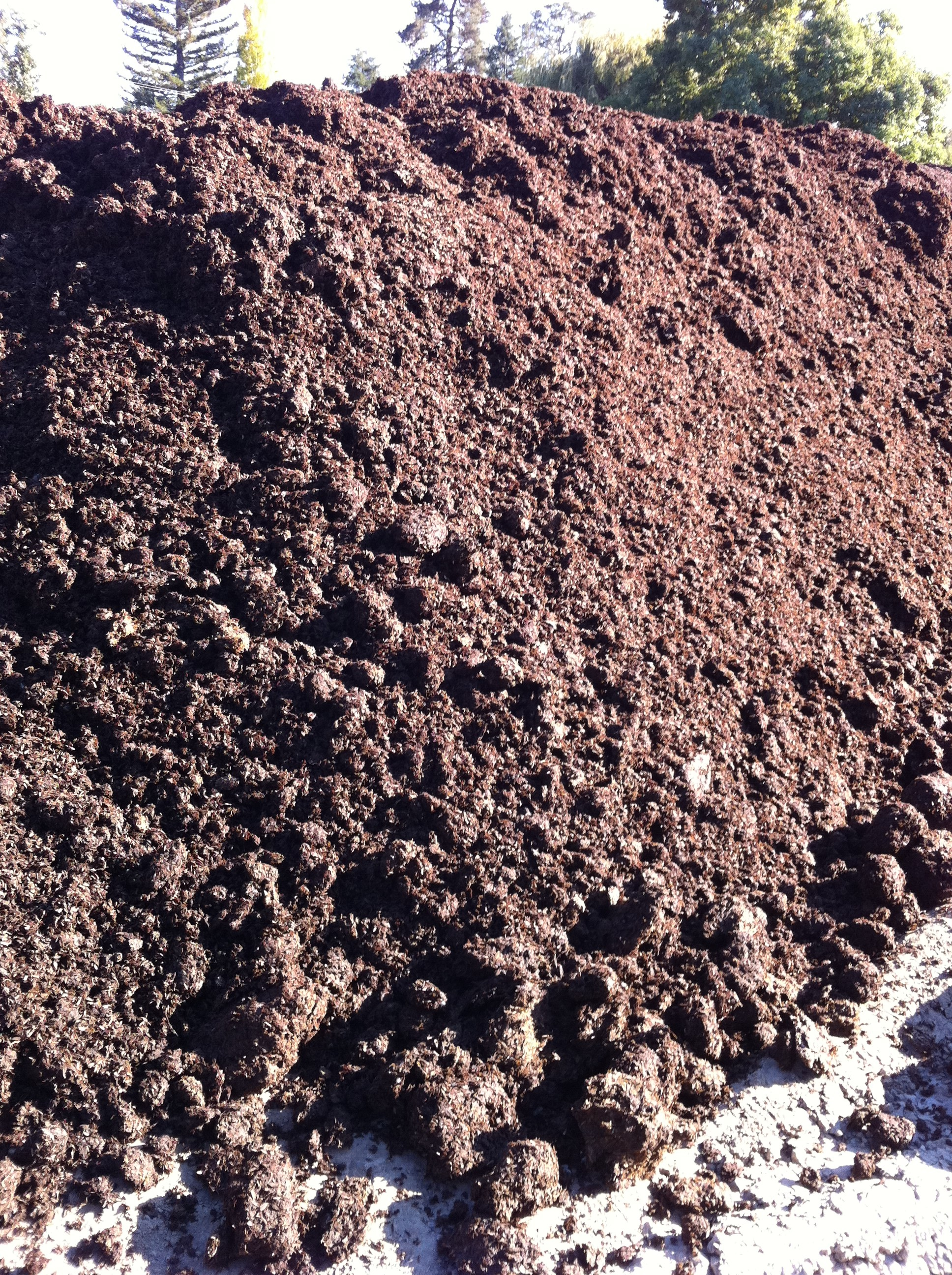 Dehydrated Cow Manure The Best Cow 2017